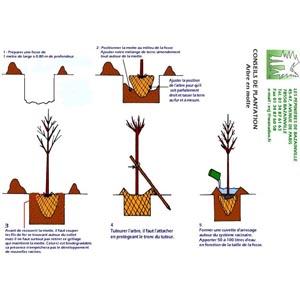 Conseils pour planter un arbre en motte - Plantation arbre en motte ...