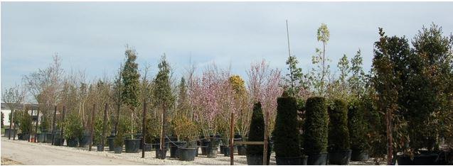 Plantes en conteneurs chez les pépinières de Bazainville