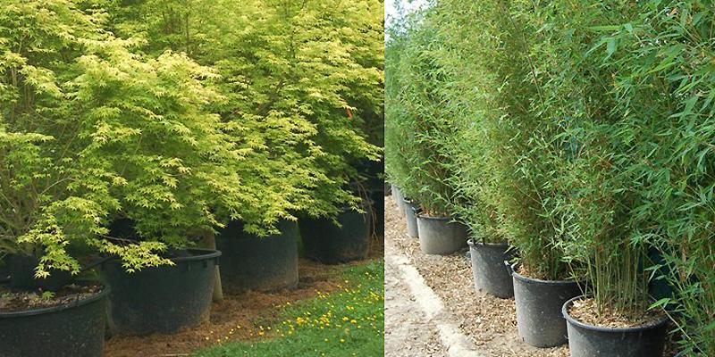 Empotage ou rempotage de vos arbustes