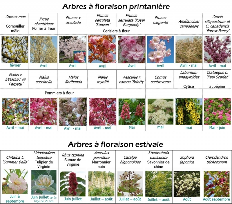 arbres aux magnifiques floraisons printanières