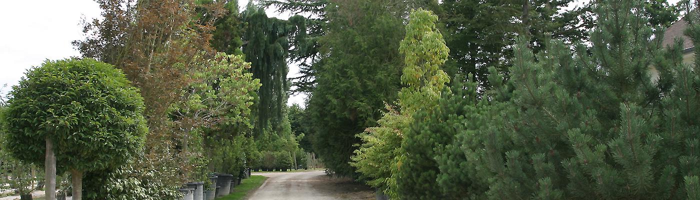 Sélection d'arbres de très grande taille - 20 à 30 mètres