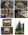 Arrachage d'arbres en bac