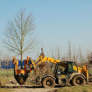 Transplantation des arbres et arbustes