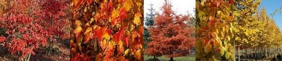 Collection d'arbres et d'arbustes à coloration automnale