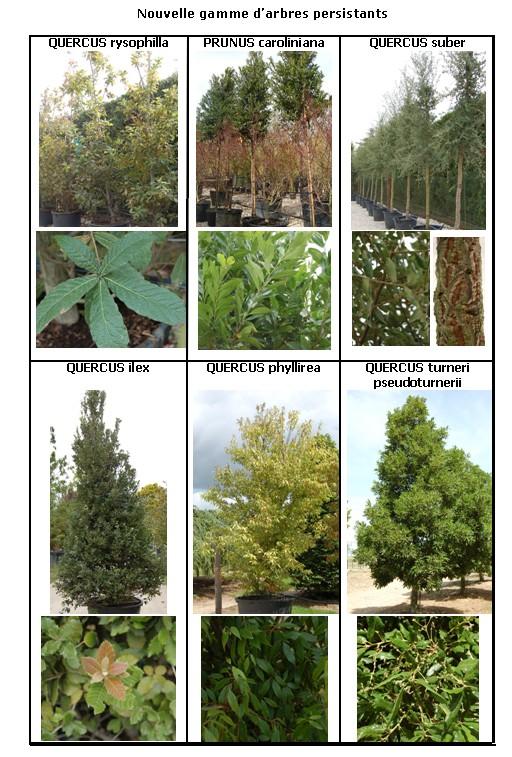 Nouvelle gamme d'arbres persistants