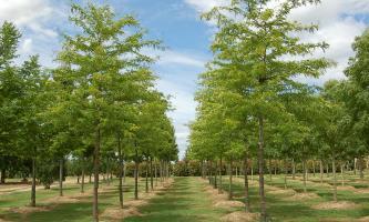 catalogue arbres en pépinières