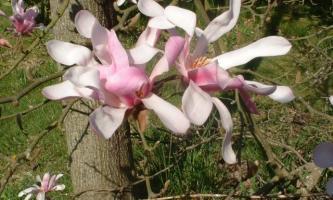 catalogue arbustes en pépinières