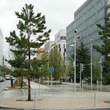 Pourquoi planter des arbres en villes ? Pépinères de Bazainville