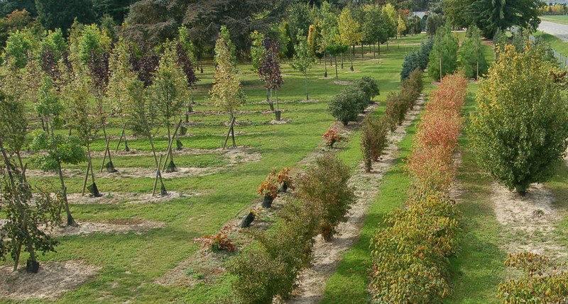 Pépinières de grands arbres et conifères - Yvelines 78