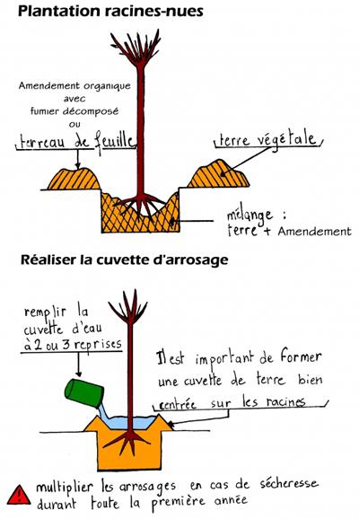 Arrosage - Plantation Arbres et Arbustes