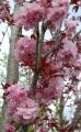 Arbustes fleuris conseillés par les pépinières de Bazainville