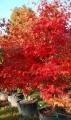 Un beau jardin d'automne avec les pépinières de Bazainville