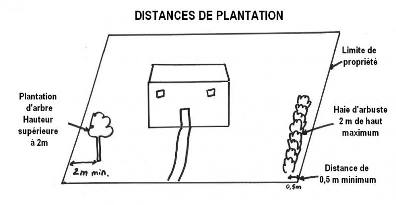 Distances de plantation arbres, arbustes et conifères