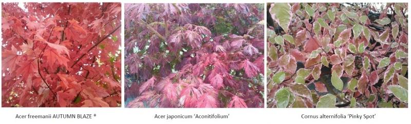 Arbres et arbustes automne 2015 - Haut en couleurs !